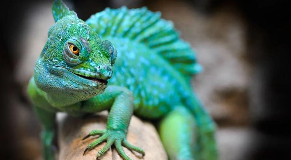 Ученые: рептилии различают оптические иллюзии