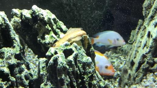 В аквариуме «Питерленда» плавают мертвые рыбы