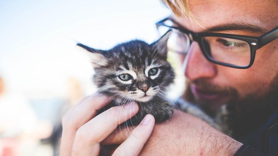 В России появляются pet friendly офисы — «Манго Телеком»