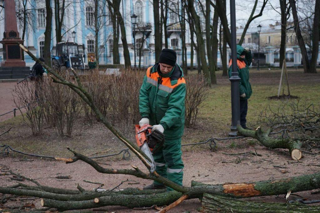 «Они мертвые»: в Комблаге попытались оправдать вырубку деревьев в Никольском саду