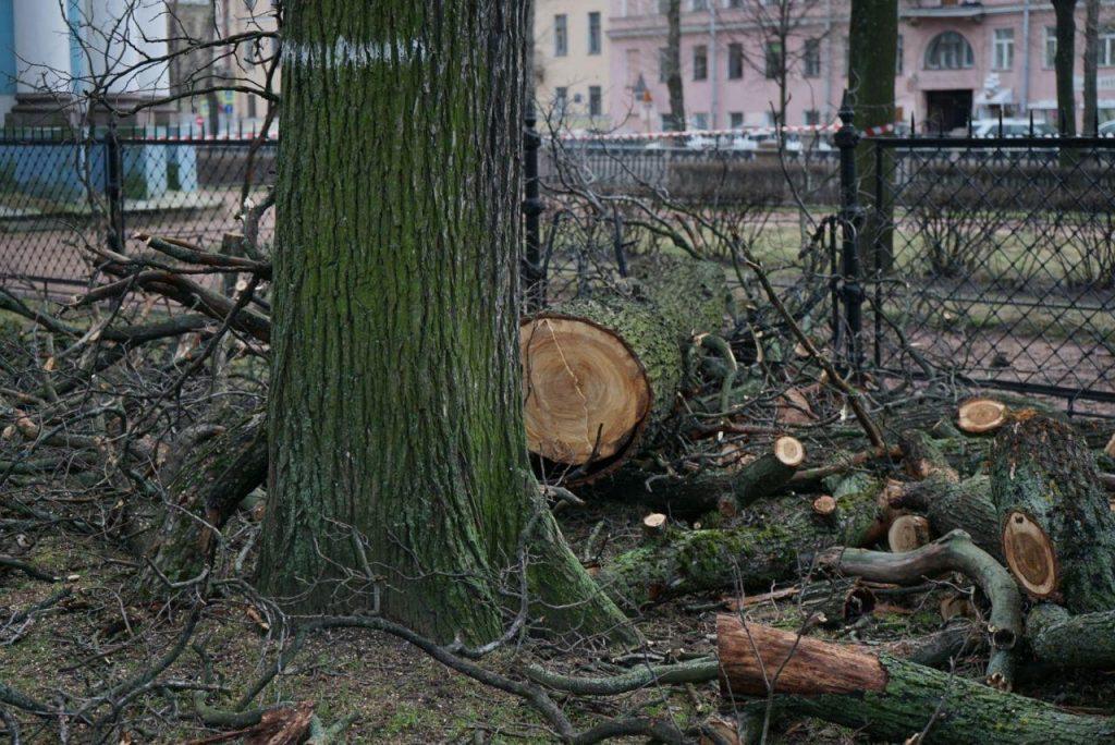 Юрист объяснила, почему петербуржцам нельзя самовольно высаживать деревья у дома