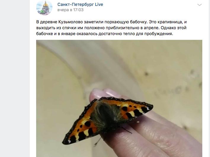 В Кузьмолово из-за аномально теплой зимы проснулись бабочки