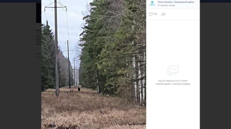 На севере Петербурга заметили агрессивного одинокого коня