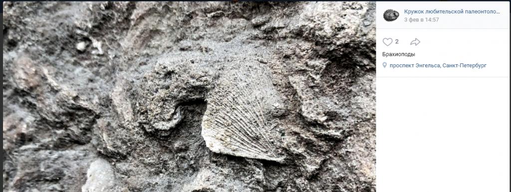 Древние окаменелости нашли на цокольном этаже жилого дома на Луначарского