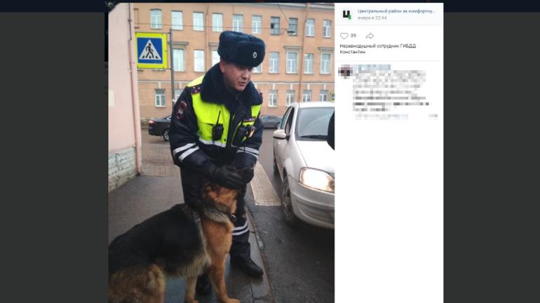 Скулили и лаяли: в Петербурге освободили овчарок, на несколько суток запертых в машине