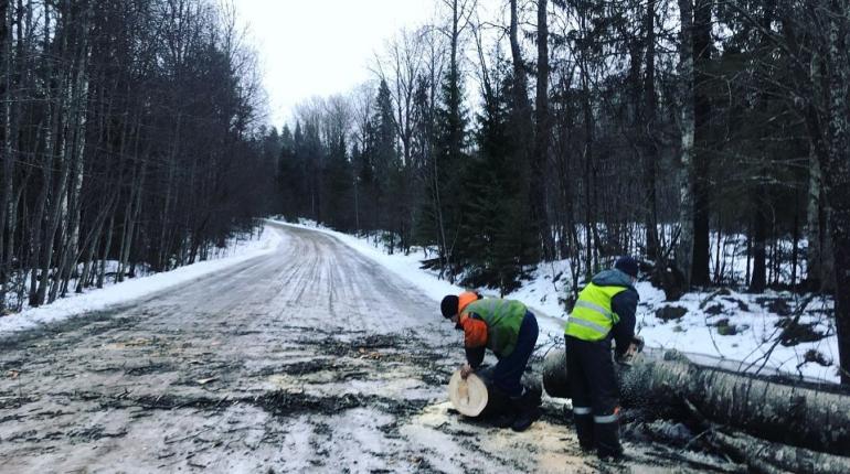 Шторм повалил больше сотни деревьев на дороги Ленобласти