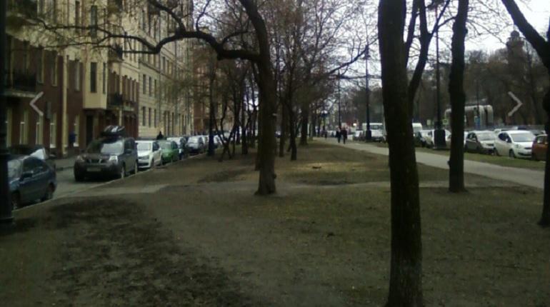 Петербуржцы призвали внести деревья на Большом проспекте в перечень памятников