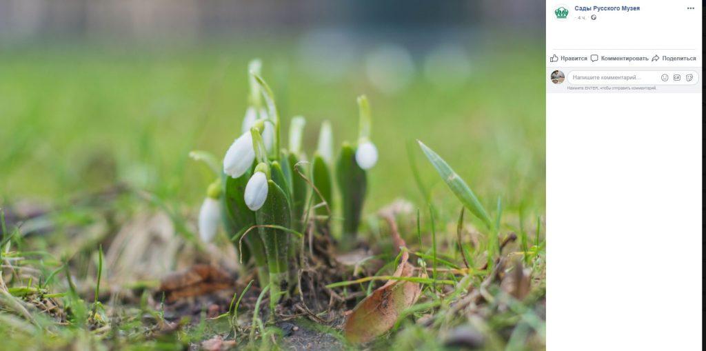 Запахло весной: ландыши начали цвести в Михайловском саду