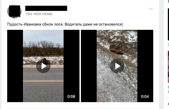 Под Гатчиной на трассе водитель сбил лося и скрылся