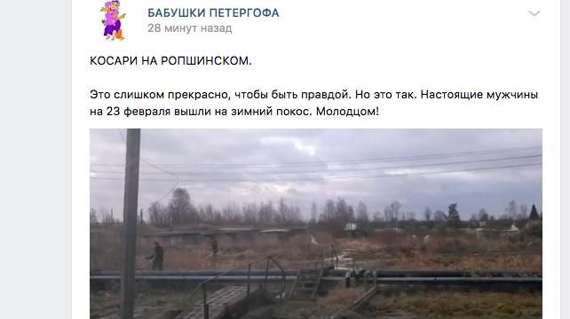 Петербуржцы вышли на покос травы февральским утром