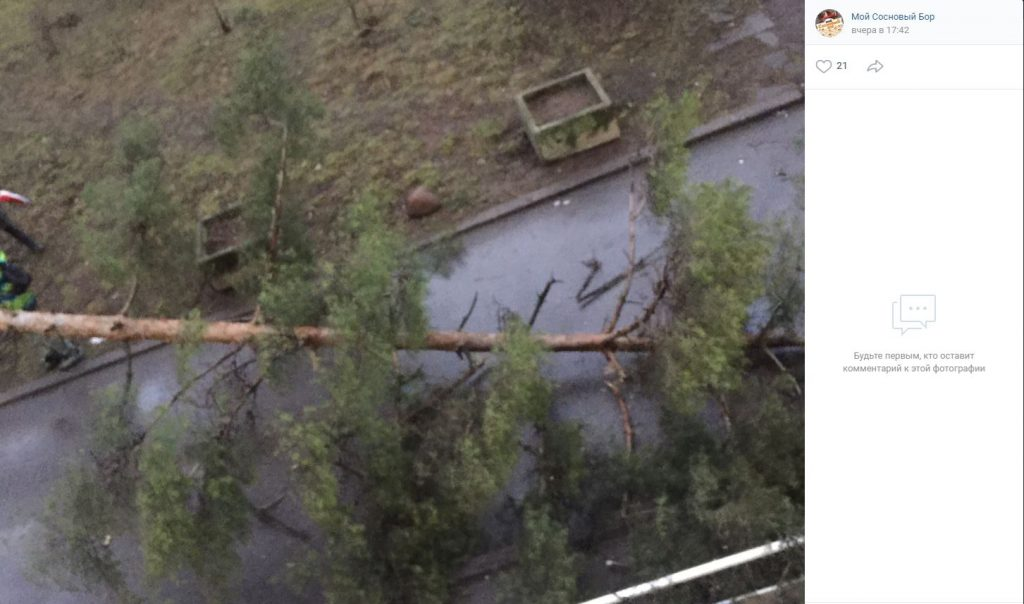 Двухметровое дерево перегородило дорогу в Сосновом Бору