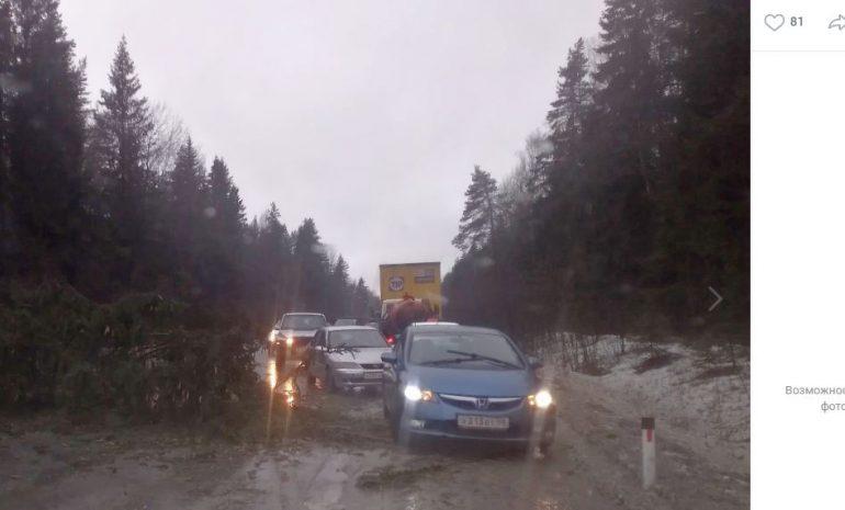 Поваленные ветром деревья не дают проехать по Выборгскому шоссе