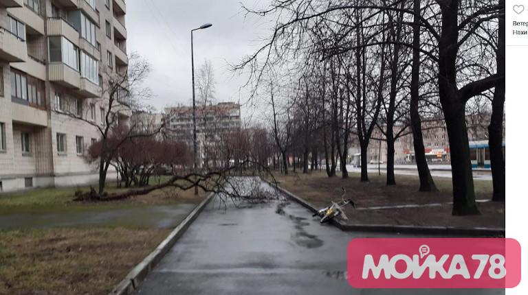В Петербурге ураган: падают светофоры, деревья и штукатурка