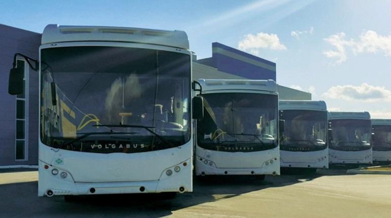 Щеглово и Петербург связал регулярный автобус