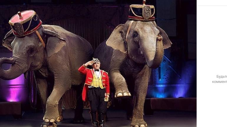 Итальянский цирк с экзотическими животными застрял в Петербурге из-за карантина