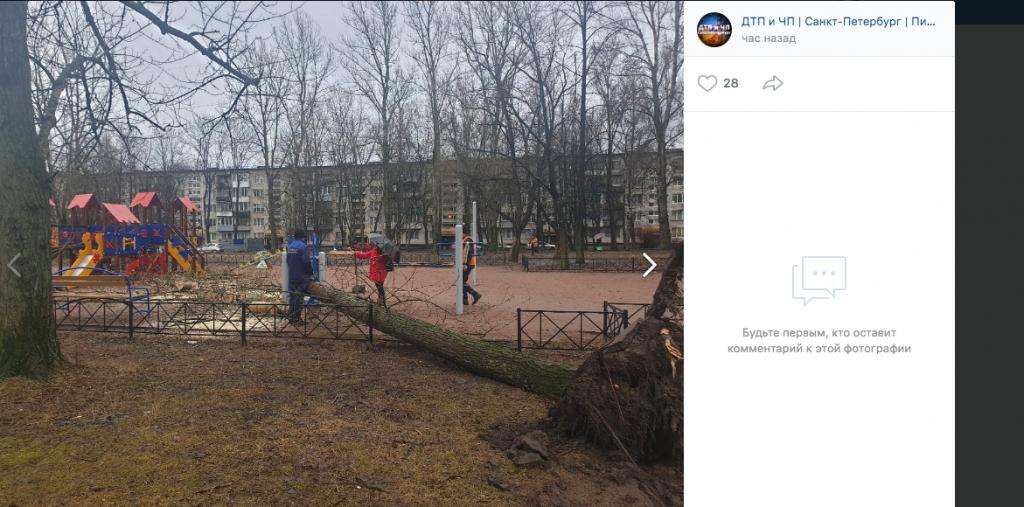Аварийный тополь рухнул на детскую площадку во Фрунзенском районе