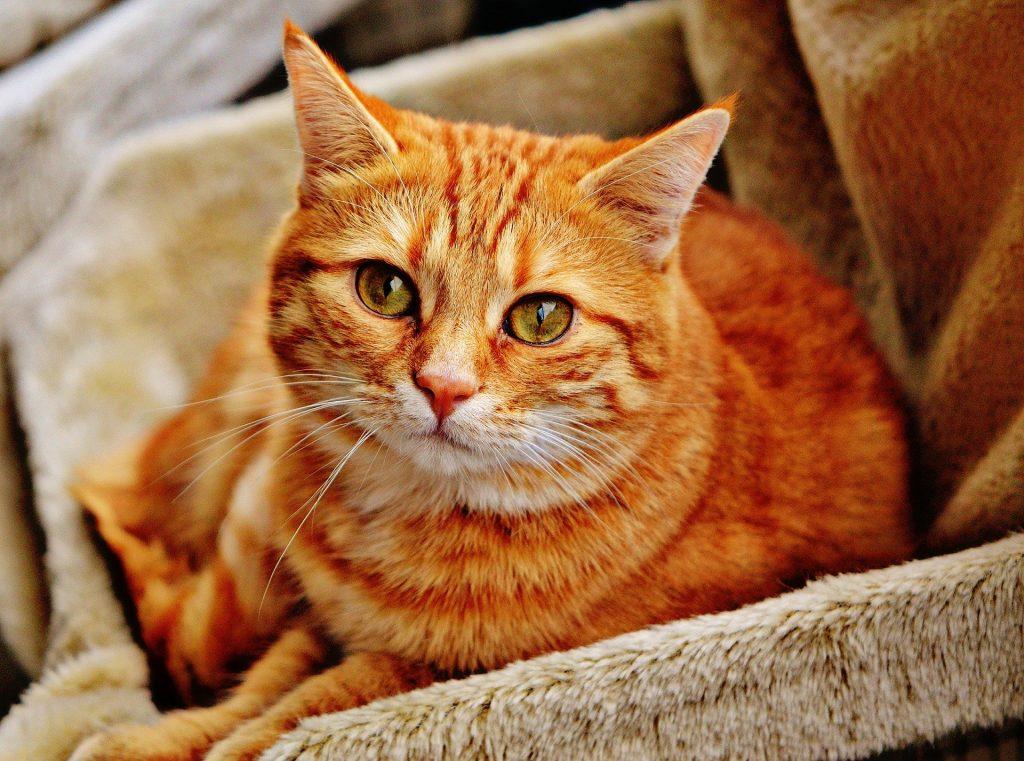 Ученые: лекарства для кошек эффективны против коронавируса
