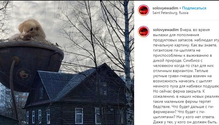 Дизайнер Соловьев показал петербуржцам гигантского цыпленка в гнезде