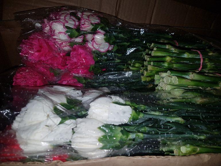Опасных насекомых нашли в гвоздиках в Петербурге: цветы уничтожили