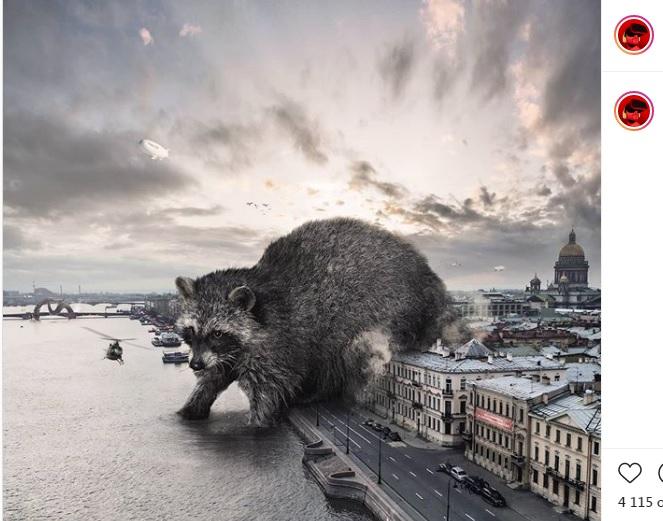 Самоизоляция «вернула» в реки Петербурга гигантских енотов