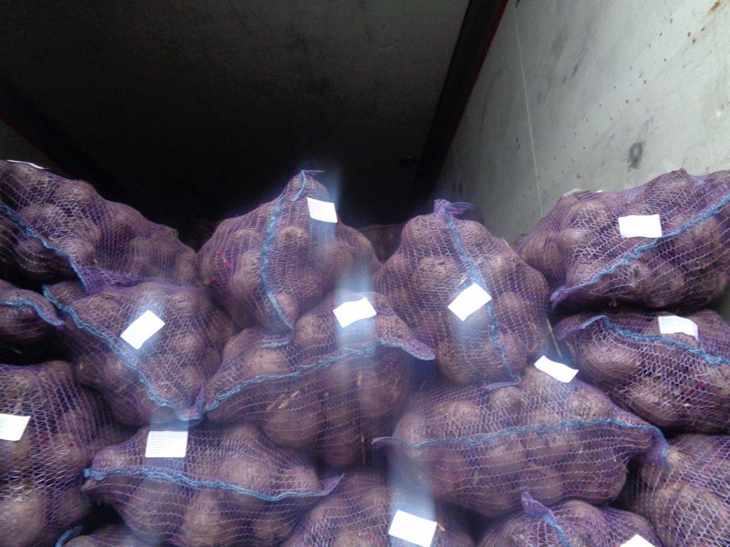 На границе с Петербургом и областью проверили более тысячи тонн овощей и фруктов