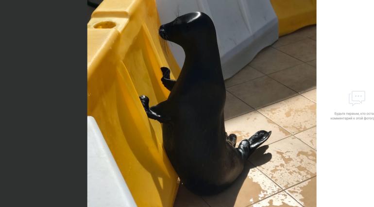 Похудевший тюлень Крошик привел в умиление пользователей соцсетей