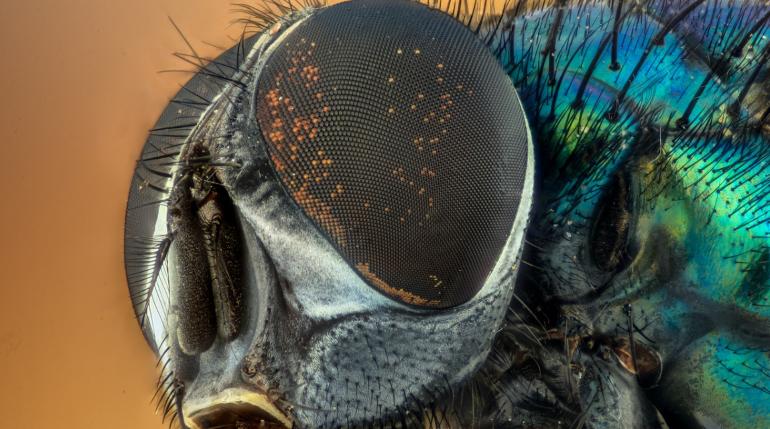Тор, Локи, Дэдпул и Черная вдова: ученые назвали новые виды насекомых в честь героев Marvel