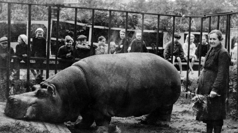 Ленинградский зоопарк подготовил цикл лекций о жизни обитателей в блокаду