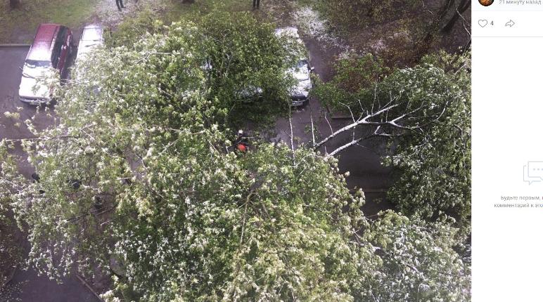 По Петербургу прошелся сильный ветер: не устояли семь деревьев