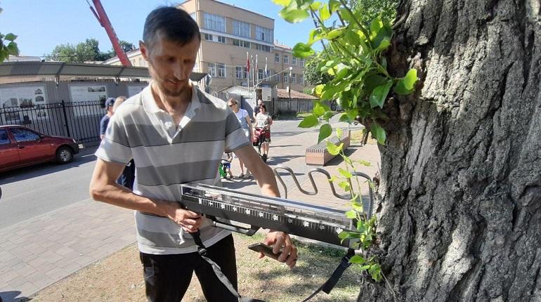 Экспертиза показала, что на Карповке под снос отдали пять здоровых тополей