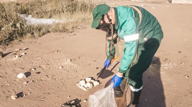Специалисты не обнаружили опасности у побережья заказника «Западный Котлин»