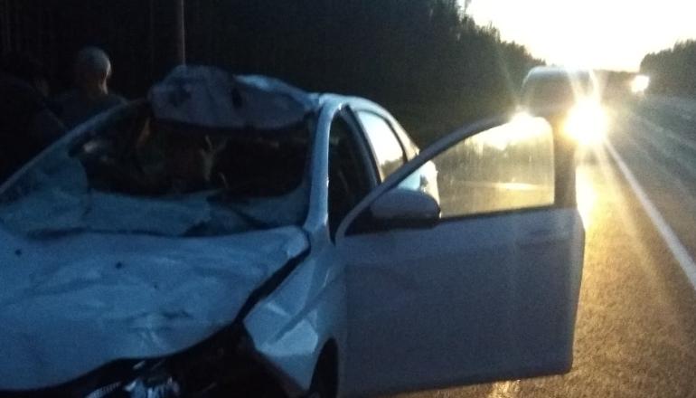 Водитель сбил лося и угодил в аварию на автотрассе «Скандинавия»