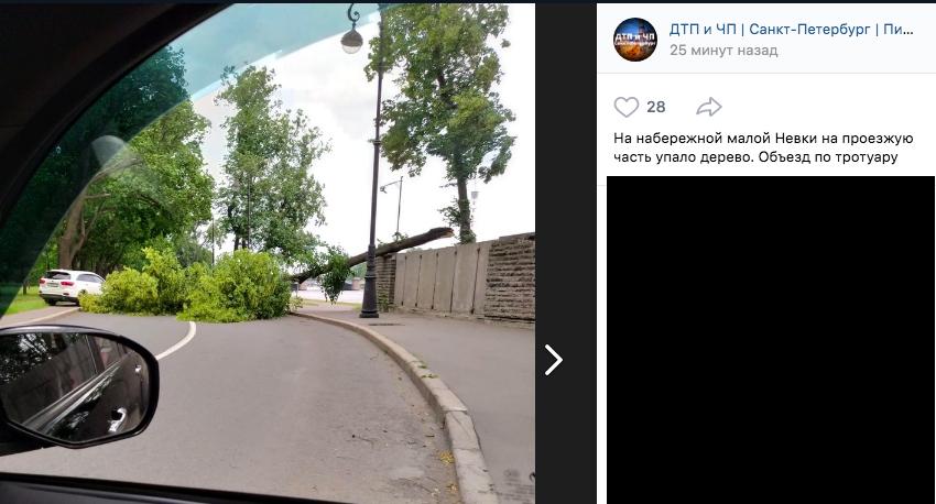 Бушующий в Петербурге ураган валит деревья и дорожные знаки