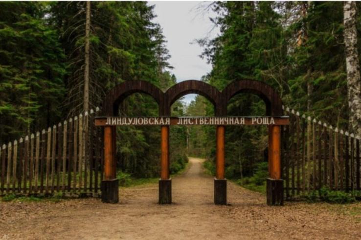 В Линдуловской роще появится экологическая тропа: волонтеры выиграли президентский грант