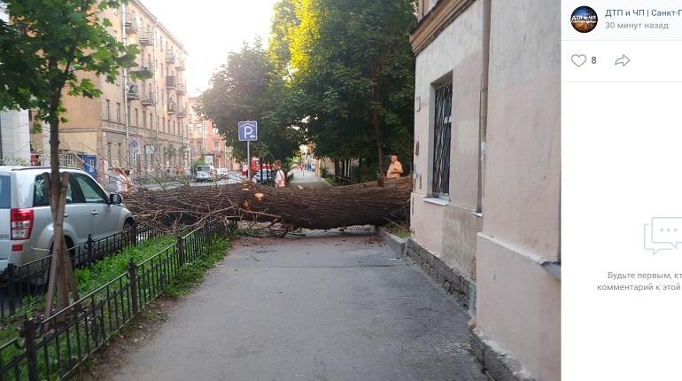 На Социалистической улице рухнуло дерево