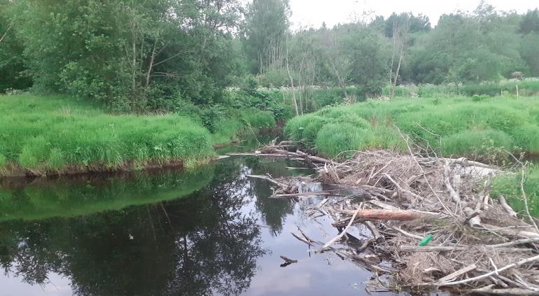В Ленобласти поймали подозреваемого в убийстве мужчины, чьи останки нашли в реке