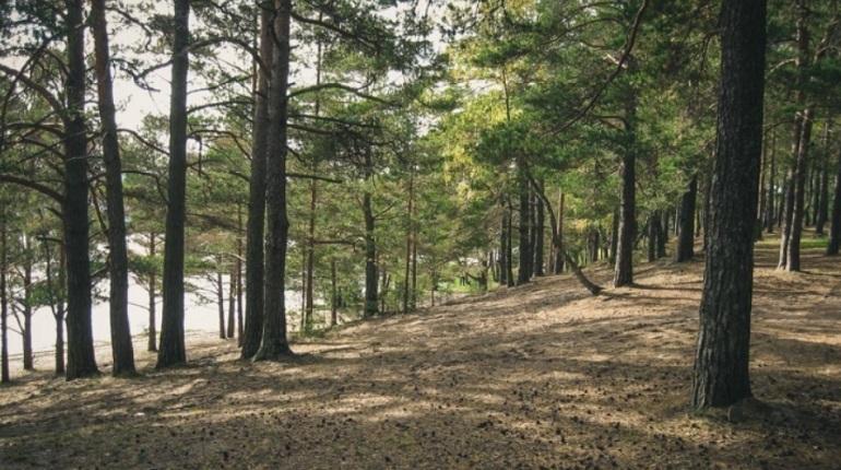 Ленобласть сократила объем незаконных рубок леса на 98%
