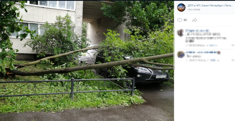 Адвокат рассказал, как получить компенсацию за упавшее на машину дерево