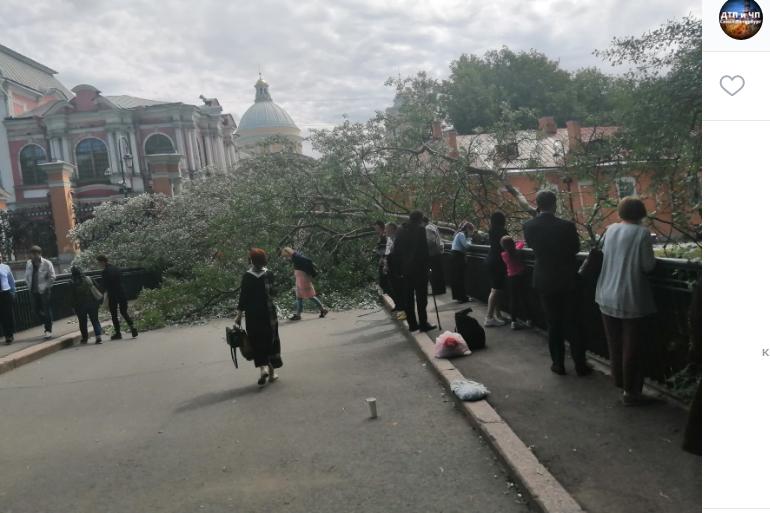Упавшее дерево заблокировало проход в Александро-Невскую лавру