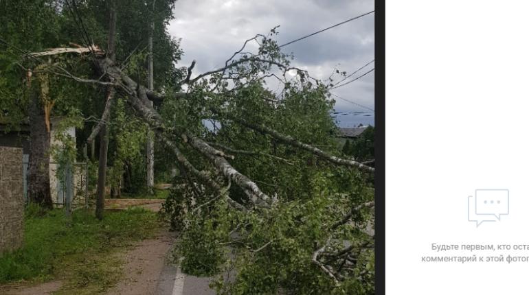 Петербург ждет день летающих деревьев: на город идет гроза