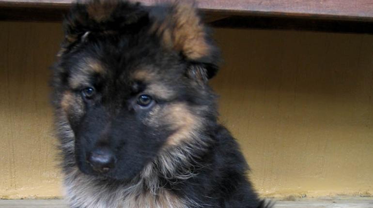 Разбойницы с пистолетом напали на собачий приют в Красном Селе и взяли по щенку