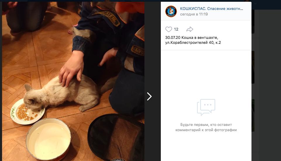 В Петербурге спасли кошку, пять дней просидевшую в вентшахте