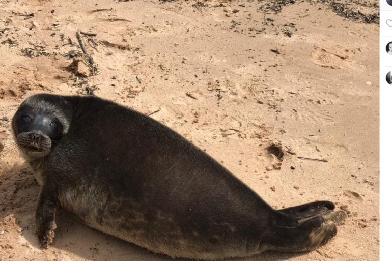 Пытался укусить за подмышку: тюлень Шлиссик равняется на Крошика и не хочет обратно в залив