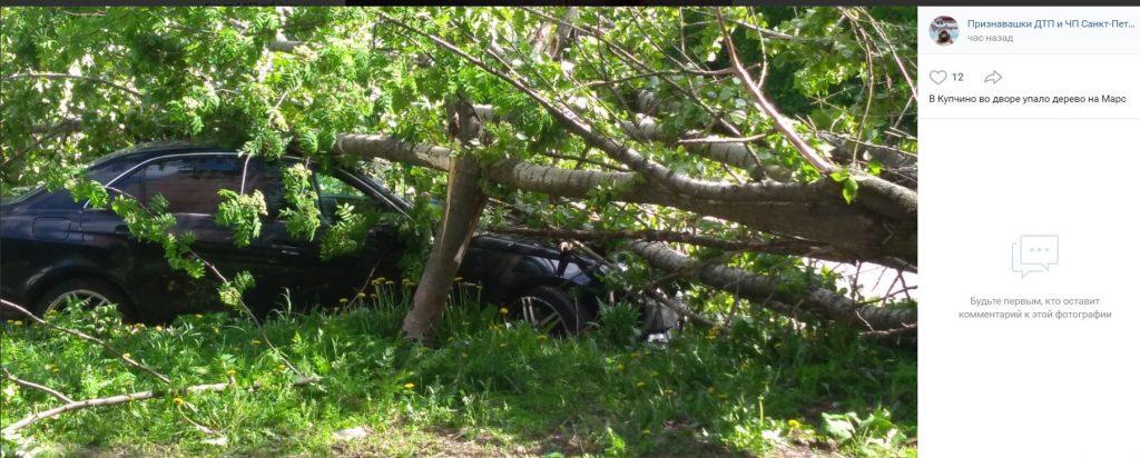 Упавшее дерево повредило ещё один Mercedes в Купчино