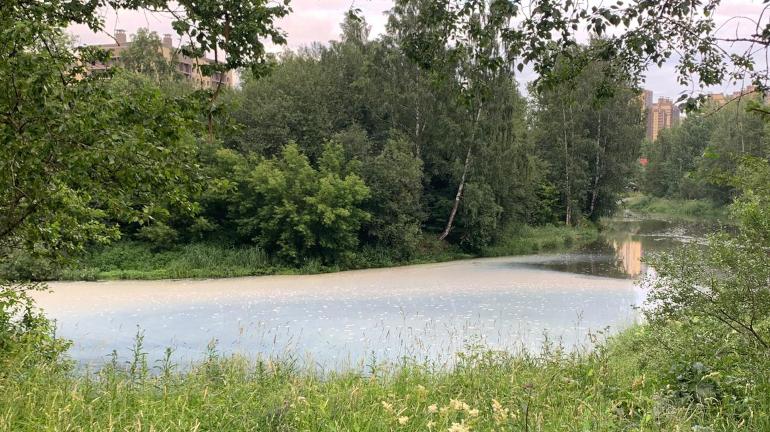 Петербургский Водоканал ликвидирует последствия сброса в Славянку