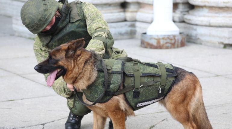В Ленобласти террористы не пройдут — мотострелки ЗВО готовы к атаке