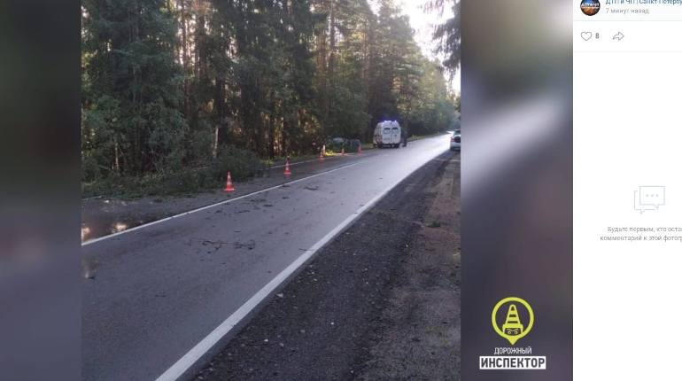 Смерть в лесах под Выборгом: водитель врезался в дерево и погиб на месте
