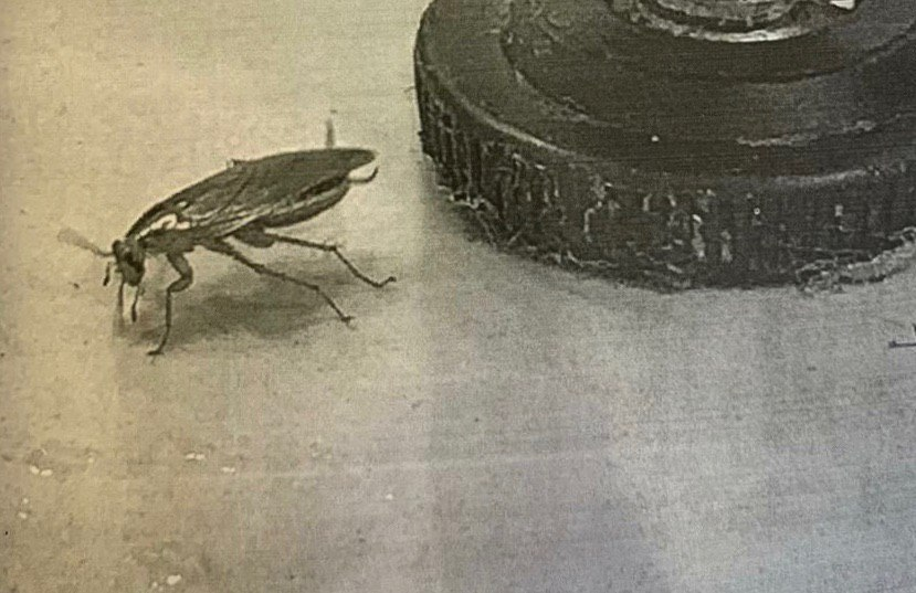 В кафе на Казанской нашли тараканов, там сотрудников не проверяют на коронавирус