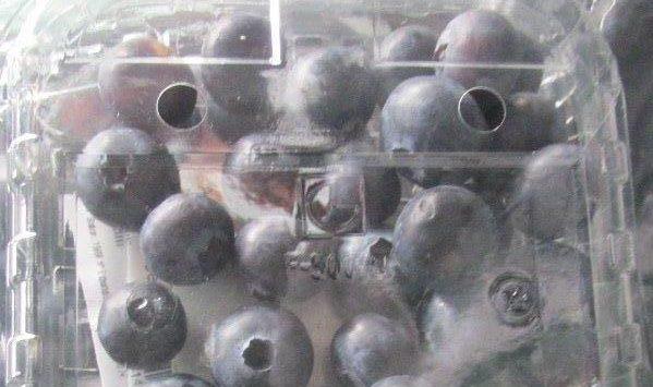 Через Псков из Латвии провезли 177 тонн голубики