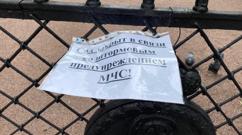 Петербург готовится ловить летающие деревья: сады и скверы закрыты из-за ветра